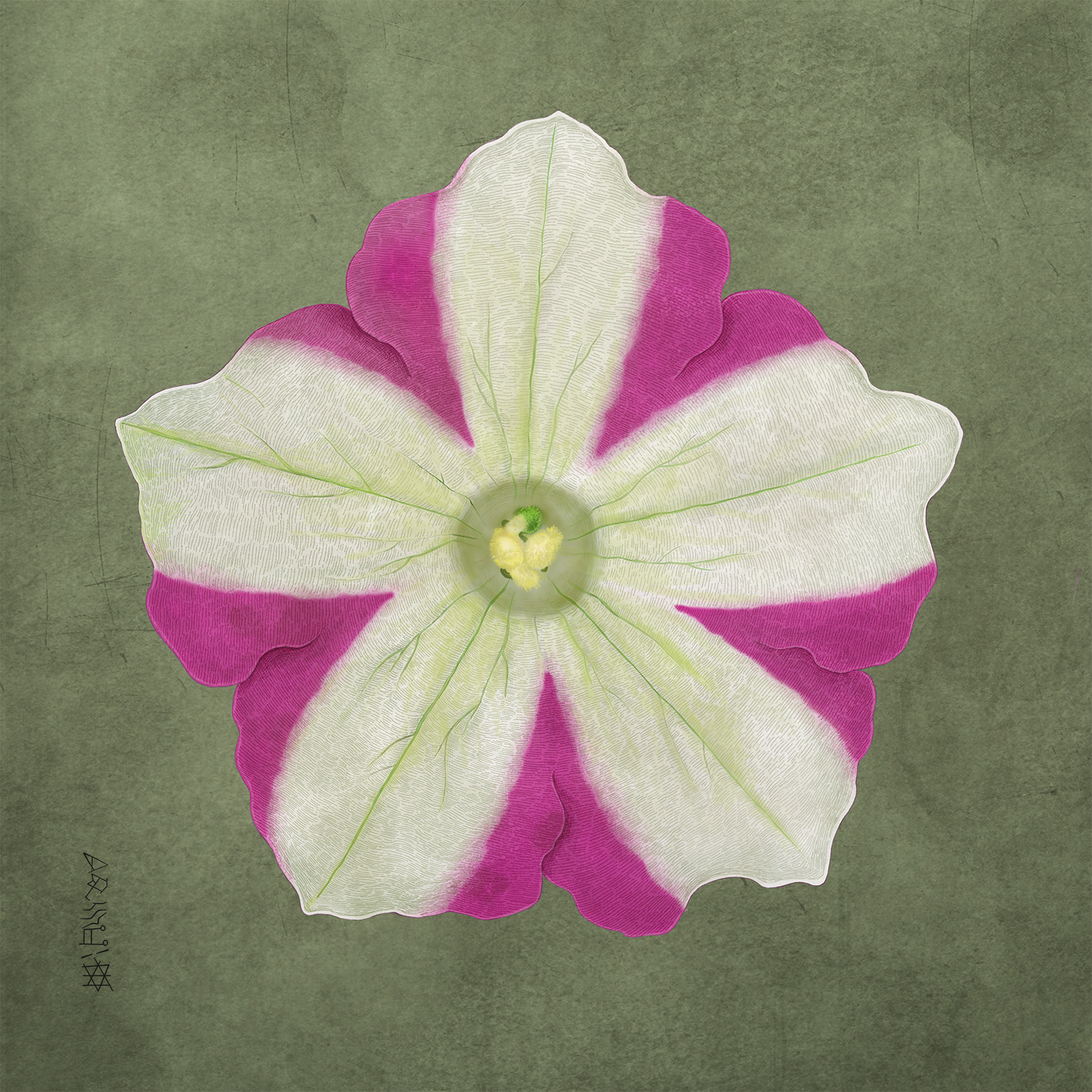 Atlasi (Petunia), 60×60cm 400dpi, Digtal Painting, Winter 2016