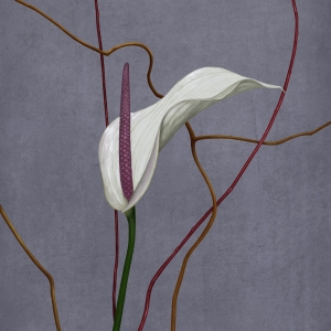 The-Anthurium-I